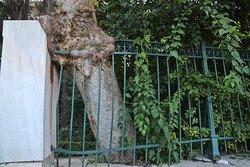 Athen - National Garden 18