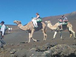 Tour en camello que se puede tomar en el tour de Lanzarote