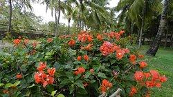 Panorama giardini