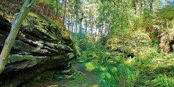 Delamere Forest Park