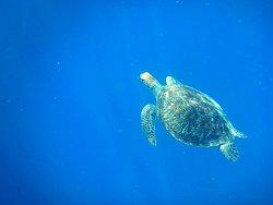 Gili Meno Turtle Sanctuary