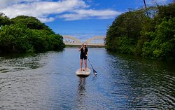 Paddling up the Anahulu Stream in Haleiwa looking for sea turtles.