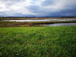 RSPB Burton Mere Wetlands