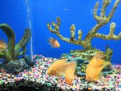 abyss-marine-aquarium