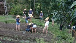 Bali Working Farm, Organic Planting