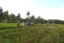 Bali Farm Tour, Walking through flower gardens