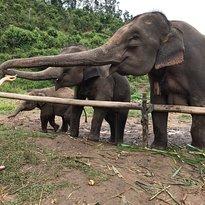Chiang Mai Elephant Empire