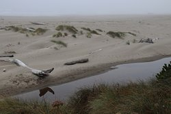 Dunes and driftwood