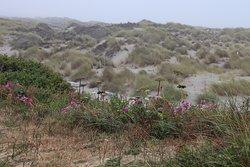 Nice dunes