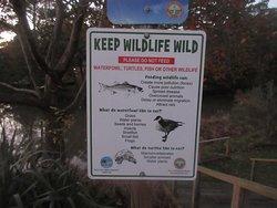 Walk along and see wildlife around the lake