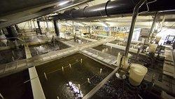Onze kwekerij waar de paling gekweekt wordt