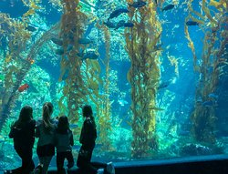 Birch Aquarium at Scripps