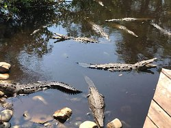 Town tour to see the Crocs