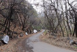 Descent from Shankaracharya Hill