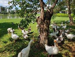 parque das Aguas em Sao Lourenco