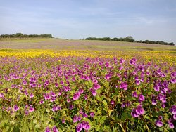 Kaas Pathar - Valley of Flowers