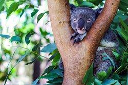Περιηγήσεις φυσικής ομορφιάς και άγριας ζωής