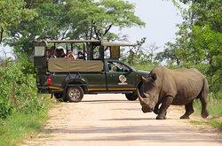 Book a Safari to uganda's National Parks parks with Godwill Safari Africa