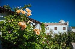 Розы в Белой крепости