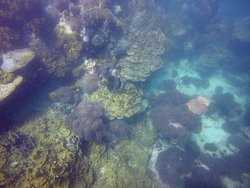 South Rock Pattaya great corals to see.