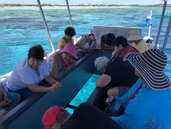 Glass Bottom Boat and Kayak Snorkel Tours