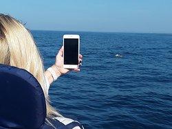 whels watching tour privet speed boat tour