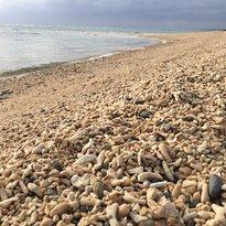 Ala Beach