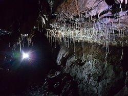 Wild Cave Tours