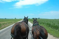 Horse-Drawn Carriage Tours