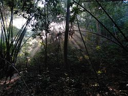 Lawachara National Park. Sreemangal, Sylhet