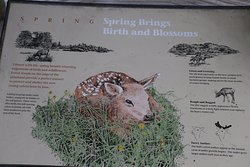 Spring brings birth and blossoms