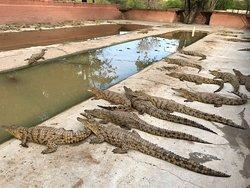 Crocodile Park Victoria Falls