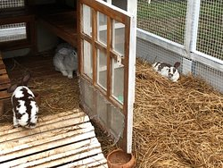 Lovely hotel but could be a front for rabbit trafficking!