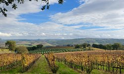 So close to Tuscany's top wineries - try the Brunello!