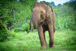 Udawalawe Safari Fun