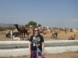 Feira de Camelos em Pushkar.