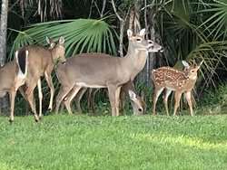 Some of the local wildlife