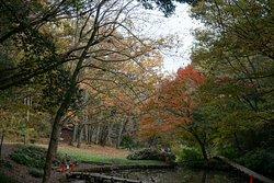 谷間の池の周りの紅葉