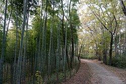 よく手入れされた見事な竹林
