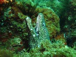 Ilha escalvada - Guarapari - Acqua Sub