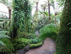 The Botanic Gardens hold 7 National collections; - Zingiber, Vireya Rhododendron, Kaempferia, Globba, Curcuma, Boesenbergia and Aeschynanthus,