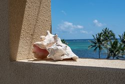 Conch Shell and the Caribbean