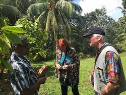 DAY TRIP IN THE  CACAO PLANTATION