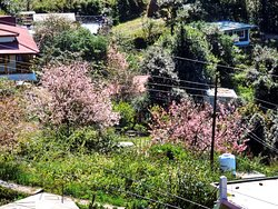 View from Pangot village