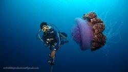 Pata Negra Divers
