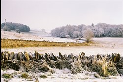 A light dusting of snow topped by a hoar frost nearby, with some hardy sheep, in countryside nearby Wren House.