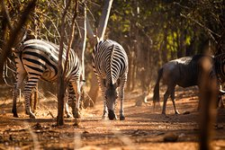 Zebras and many other animals await you.