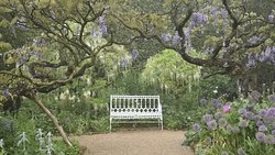 Hidcote National Trust gardens in late spring - wisteria and alliums abound