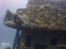 C56 wreck, a decommissioned mine sweeper from WW!! purchased and sunk by Mexico to provide for coral growth