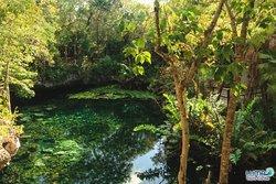 Cenote Nicte-Ha in the Dos Ojos park.